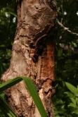 Cinnamomum verum bark by Marion Schneider & Christoph Aistleitner
